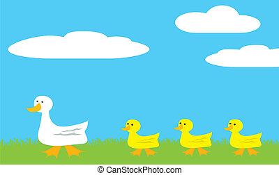 Walking Ducks - A mama duck walking her baby ducklings in...