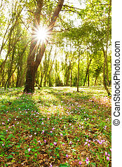 Sunburst forest - Magical vibrant image of a forest with...