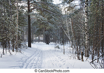 Road in a wonderful winter forest