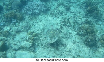 Loggerhead Seaturtle 1 - Beautiful Loggerhead sea turtle...