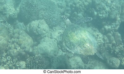 Loggerhead Seaturtle 2 - Beautiful Loggerhead sea turtle...