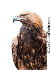 Proud Caucasian eagle isolated on white background