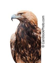 orgulloso, caucásico, águila