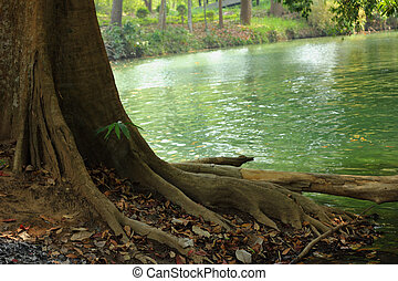 Green tree on the lake