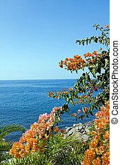 Bougainvilleas and the Atlantic Ocean, island of Madeira