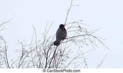 A crow on a branch