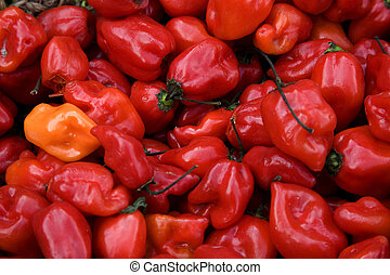 Bright Red Habanero Chile Peppers - Bright Red Habanero...