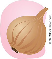 Onion illustration - Sketch of an onion Hand-drawn lineart...