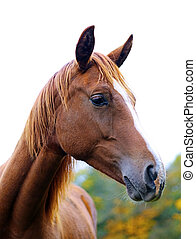 brown horse - A photography of a brown horse standing