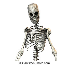 skeleton - A illustration of a skeleton on a white...