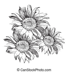 Sunflowers - Sketch sunflowers on white background