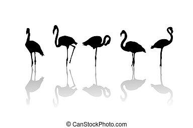 Flamingo birds - Outline drawing of flamingo birds and...