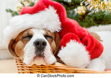 sleeping dog weared to santa hat - sleeping dog weared to to...