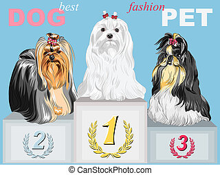 vector fashion dog champion on the podium - fashion Dog...