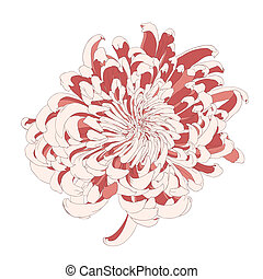 Vector chrysanthemum flower. - Vector chrysanthemum flower...