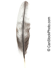 feather on a white background macro