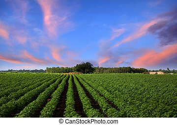 Farm lands in India with evening sky