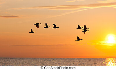 Birds flying in the sky at sunset - Eight birds flying in...
