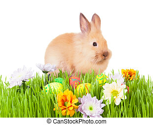Brown baby rabbit in green grass with flowers and easter eggs