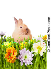 Brown baby rabbit in green grass with flowers and easter...