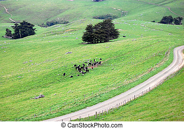 Gravel road and cows at farmland rural area - Cows at...