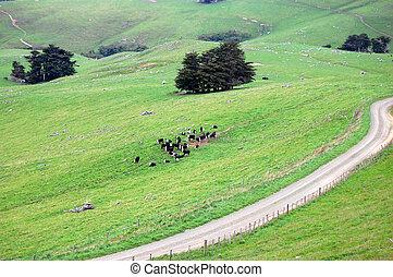 Gravel road and cows at farmland rural area - Cows at...