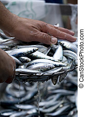 Fish at market being weighed