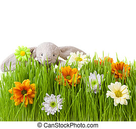 Spring flowers and rabbit on green grass