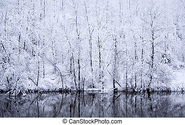 Snow day - Snow in a forest with reflection on river