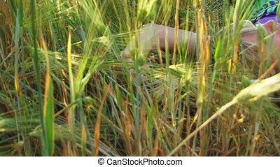 In a field of wheat