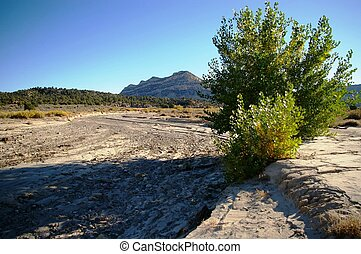 Cottonwood with Mountain - Small cottonwood in a dry...