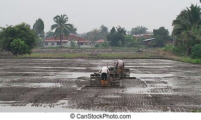 Ploughing / plowing paddy field 2 - farmers plowing the...