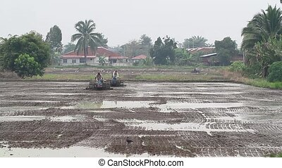 Ploughing / plowing paddy field 1 - farmers plowing the...