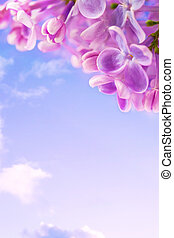 art lilac flowers on a background of blue sky