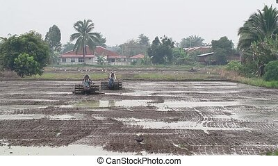 plowing paddy field 1 - farmers plowing the paddy field