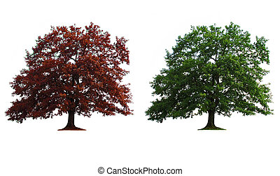 two trees in line