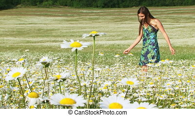 Bouquet of chamomiles - Woman picking chamomile for a...