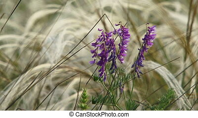Wildflower - Lonely wildflower among feather grass