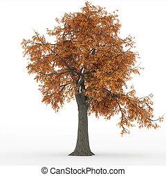 Outono, cinza, árvore