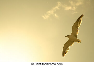 flying sea-gull - photo of above flying sea-gull, brown...