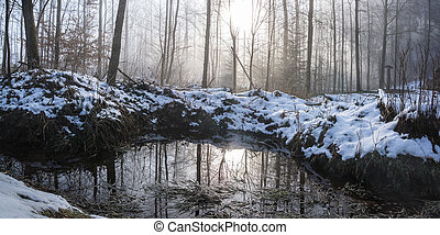 black forest - Winter in the Black Forest