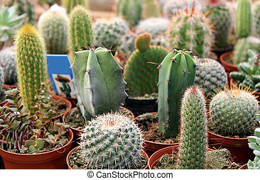 cactus collection - collection of green cactus and...
