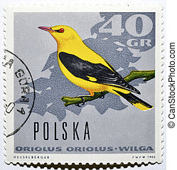 Stamp with Eurasian Golden Oriole - Polish postage stamp...
