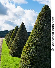 Topiary trees - Number of topiary trees in beautiful...
