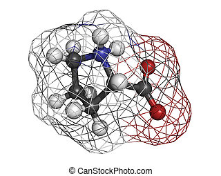 Proilne Pro, P amino acid, molecular model Amino acids are...