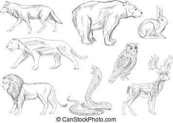 wild animals vector set