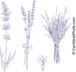 淡紫色, 鉛筆, 圖畫, 矢量, 集合
