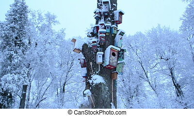 bird houses colors snow - panorama old dead tree trunk and...