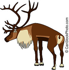 Caribou Bull - vector illustration of a bull Caribou...