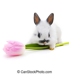 small rabbit with flower - small rabbit with flower isolated...